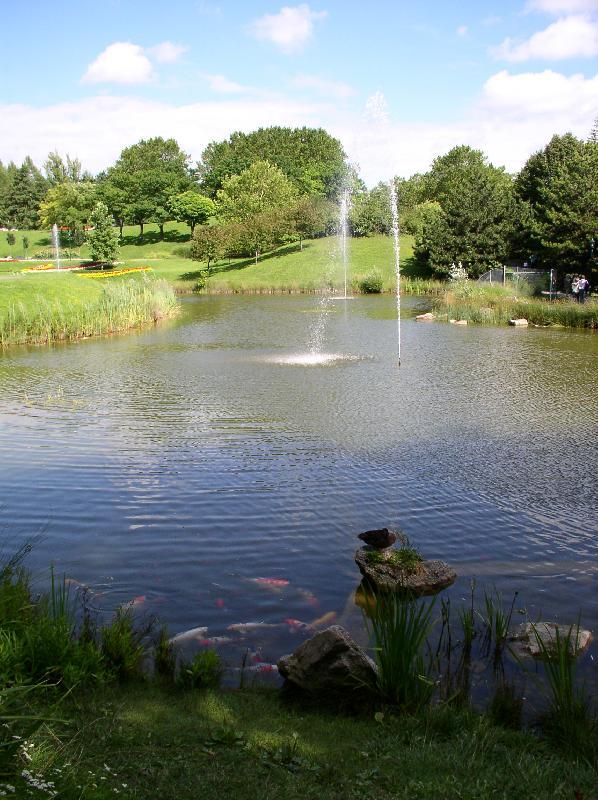 Парк в Вене (рыбы почти ручные)